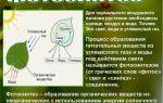 Воздушное питание растений — фотосинтез – биология