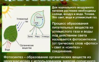 Наследственная информация – биология