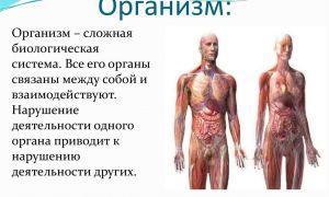 Организм — открытая система – биология