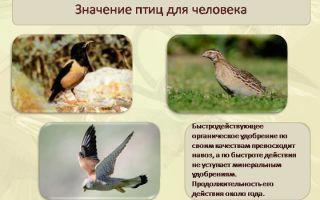 Значение птиц в природе и для человека. охрана и привлечение птиц – биология