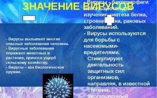 Опасные вирусные заболевания человека – биология