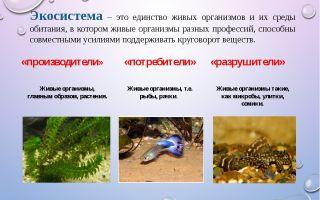 Экосистема – биология