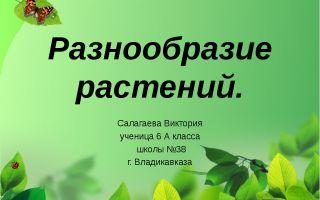 Разнообразие растений – биология