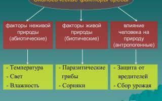 Факторы среды – биология