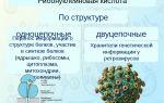 Рибонуклеиновые кислоты – биология