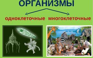 Одноклеточные и многоклеточные организмы – биология