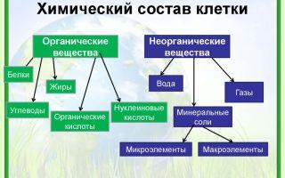 Химический состав клетки. неорганические вещества – биология