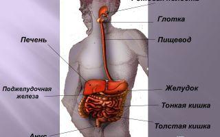 Пищеварение в ротовой полости. глотка и пищевод – биология