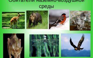 Обитатели наземно-воздушной среды – биология