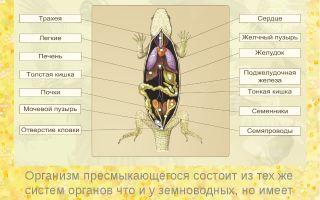 Общая характеристика и особенности внешнего строения пресмыкающихся – биология