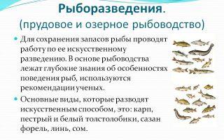 Хозяйственное значение рыб. рыбоводство и охрана рыбных запасов – биология