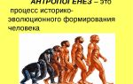 """Выводы """"общий обзор организма человека"""" – биология"""