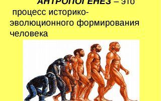 Антропогенез с точки зрения эволюции – биология
