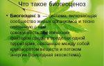 Биосинтез и транскрипция – биология