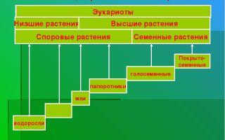 Этапы развития растительного мира – биология