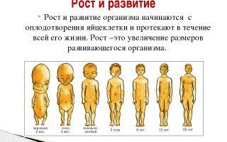 Рост и развитие организма – биология