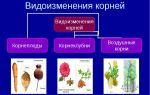 Многообразие земноводных. их значение в природе и для человека – биология
