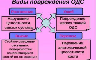 Нарушения опорно-двигательной системы. травматизм – биология