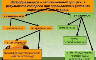 Химические соединения клетки – биология