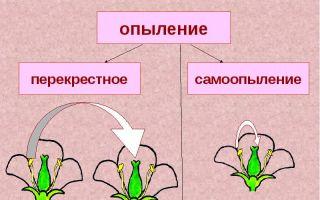 Цветение и опыление растений – биология