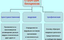 Значение химических элементов для живых организмов – биология