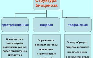 Кислородный этап энергетического обмена – биология