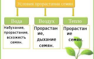 Условия прорастания семян – биология
