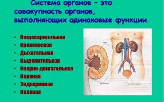 Система органов организма – биология