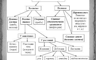 Формы размножения организмов – биология
