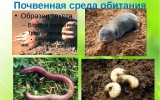 Почва как среда обитания организмов – биология