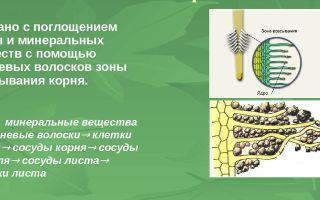 Минеральное (почвенное) питание растений – биология