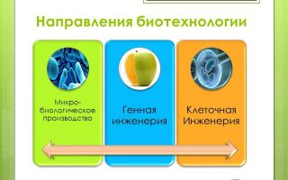 Направления биотехнологии – биология