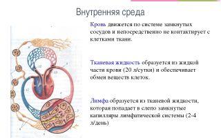 Состав крови. постоянство внутренней среды – биология