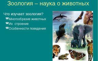 Что изучает зоология – биология
