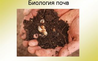 Что мы узнали о почве – биология