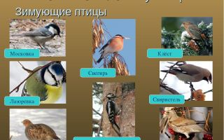 Сезонные изменения в жизни птиц – биология