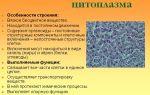 Цитоплазма и ее структурные компоненты – биология