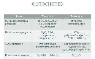 Световая фаза фотосинтеза – биология