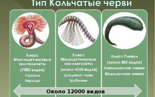 Тип кольчатые черви – биология
