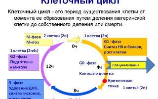 Методы цитологических исследований – биология