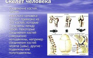 Скелет человека. соединение костей. скелет головы – биология