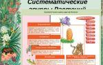 Определение видов растений и животных – биология