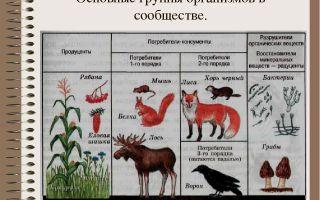 Сообщества организмов – биология