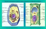 Строение клетки – биология