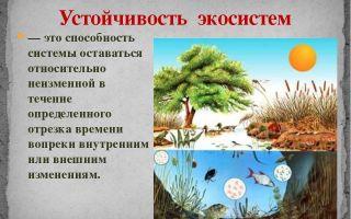 Устойчивость экосистем – биология