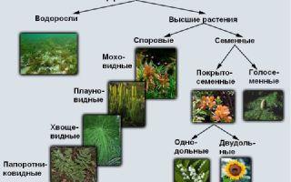 Царство растений – биология