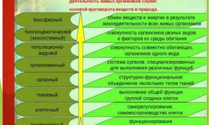 Уровни организации жизни – биология
