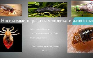 Насекомые – паразиты человека и животных – биология