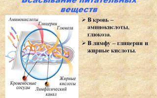 Всасывание питательных веществ в кровь – биология