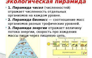 Экологические пирамиды – биология
